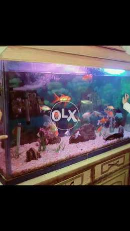 Fish aquariam 4 ft 28 inch hight 20inch wigth good looking all over...