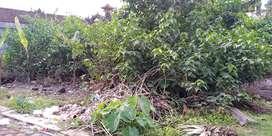 Dijual Tanah & Cari Tanah Murah di Bali - OLX.co.id