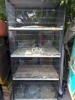 Cage For All types of birds