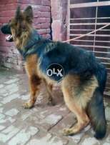 Wondering Osam Superb Beauty Excellent. Imported Female F/S
