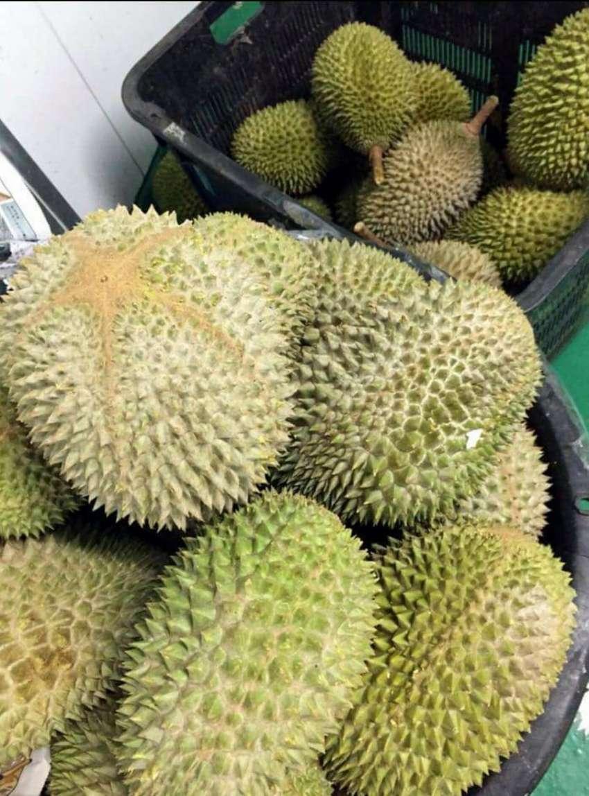 Jual Tanah Bandung Perkebunan Durian Musang King Tanah 805537685