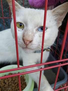 Biru Jual Hewan Peliharaan Kucing Terlengkap Di Jawa Barat Olx Co Id