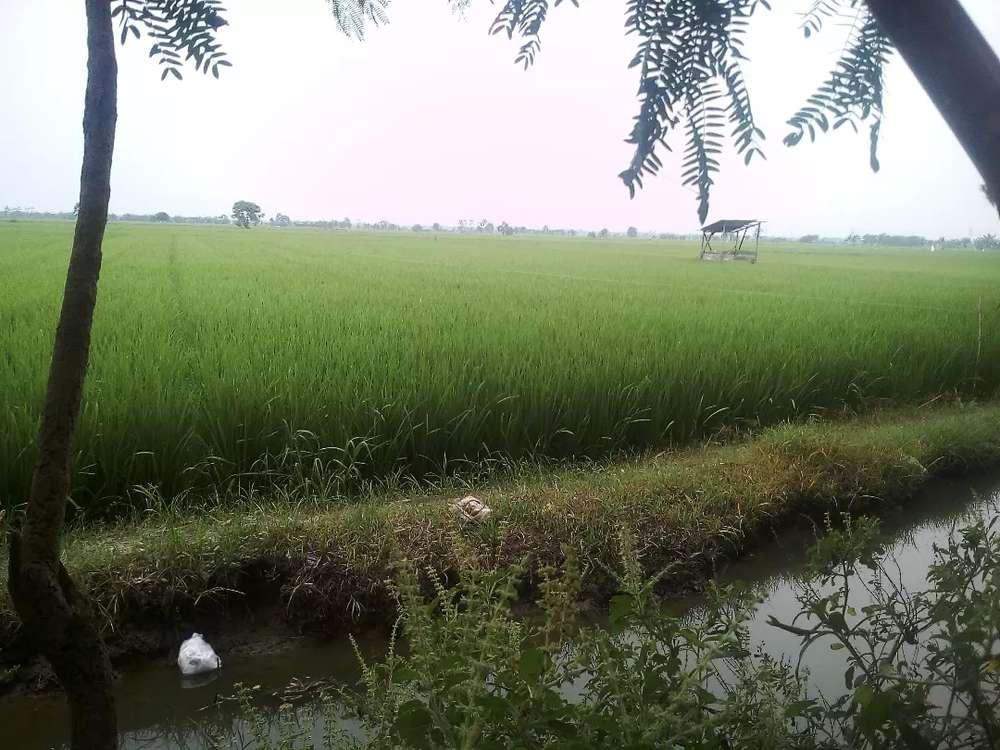 Tali Air Sawah Padi
