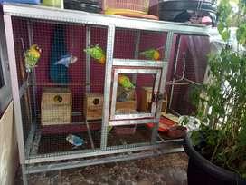 Kandang Besi Burung Jual Hewan Peliharaan Burung Terlengkap Di Depok Kota Olx Co Id