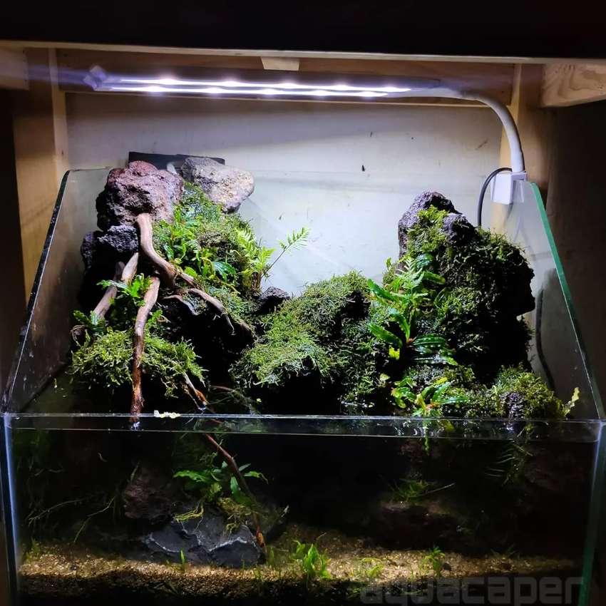 Paludarium Aquarium Aquascape Hewan Peliharaan 812680739