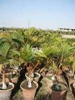 Plants available in wholesale rates