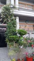 Renting a portion of 400sq yards bungalow