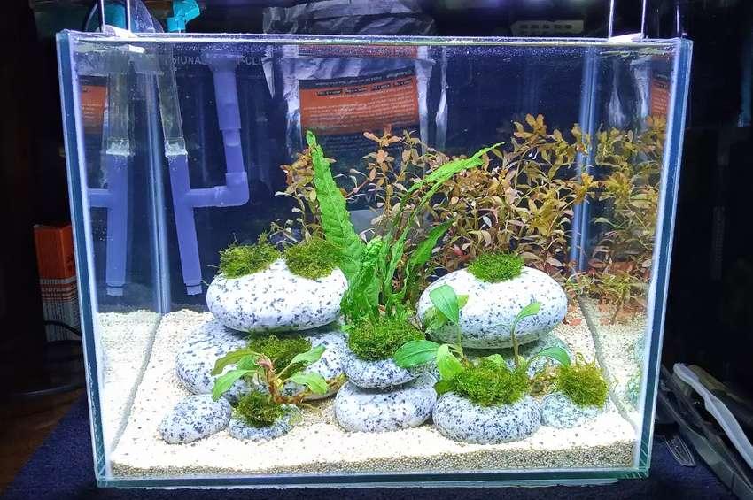 Aquascape Tank 30x20x25cm Fulset Filter Dan Lampu Aquarium Cupang Hewan Peliharaan 800067050