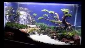 Aquascape Di Tambun Utara Olx Murah Dengan Harga Terbaik Olx Co Id