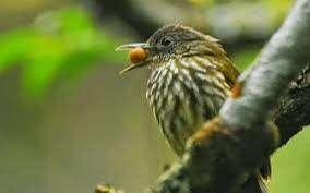 Burung Siri Siri Hewan Peliharaan 806253557