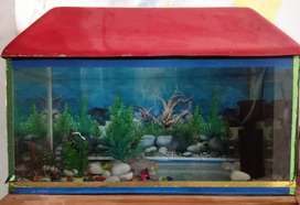Fish Aquarium Fishes Aquarium For Sale In Agra Olx