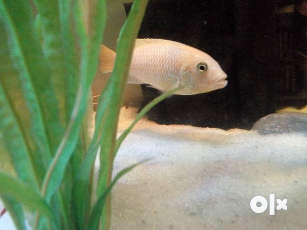 Fishes Aquarium For Sale In Noida Olx