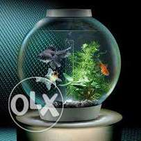 New look aquariums