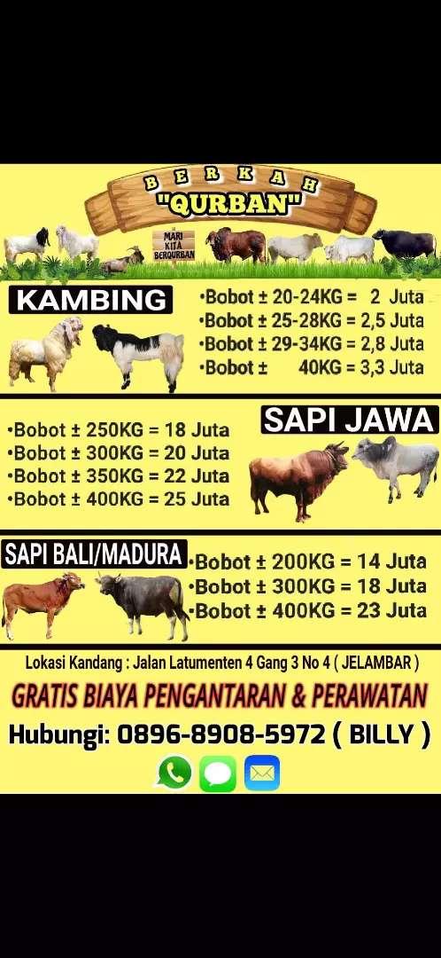Jual Hewan Qurban Kambing Dan Sapi Hewan Peliharaan 790429529