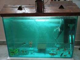 Aquarium size 3*2 feet with strong designer iron stand and wooden hut