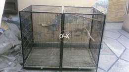 Birds cage available