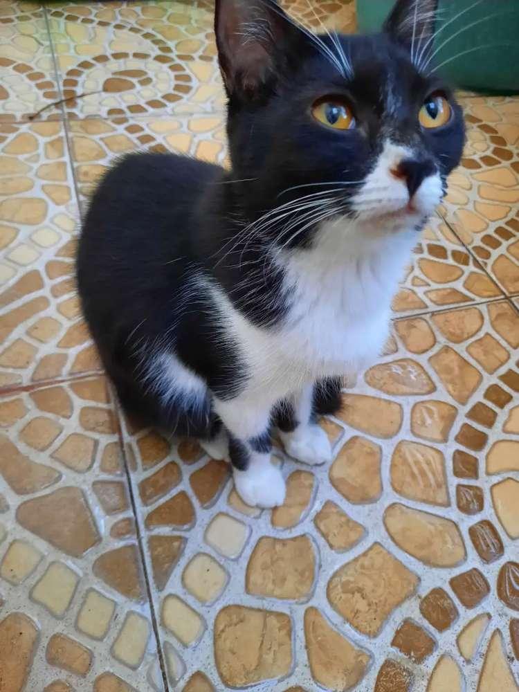 Lokal Jual Hewan Peliharaan Kucing Terlengkap Di Indonesia Olx Co Id