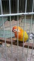 Fancy folding cage new condition