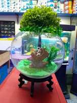 Fish Aquarium Bowl