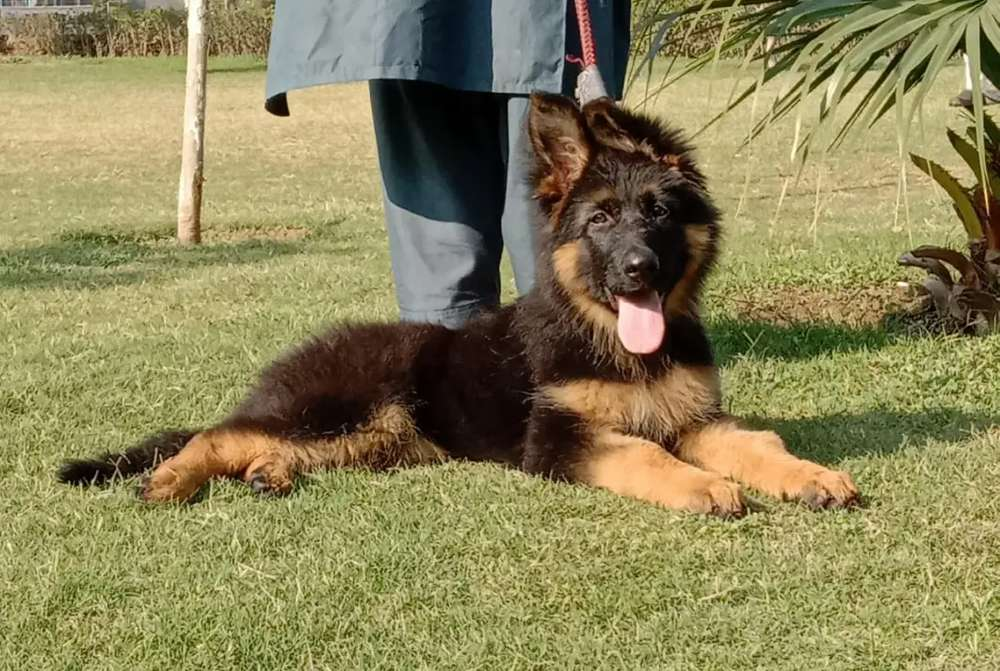 Dog trainer and accessories - Other Services - 1024163557