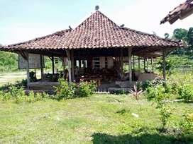 Rumah Limasan di Yogyakarta D.I. - OLX Murah Dengan Harga ...