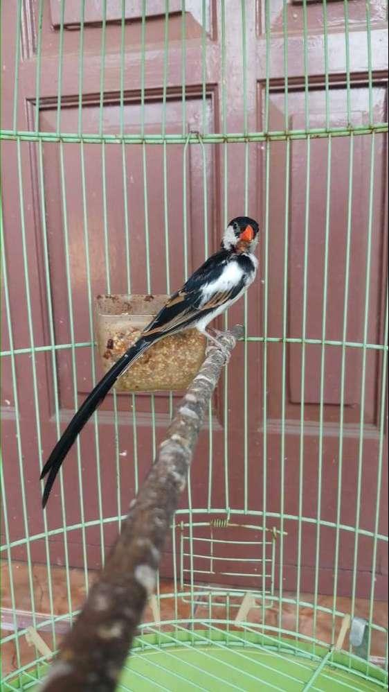 Import Jual Hewan Peliharaan Burung Terlengkap Di Indonesia Olx Co Id