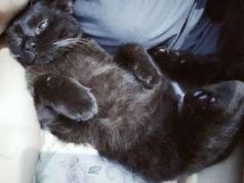 Kampung Jual Hewan Peliharaan Kucing Terlengkap Di Jakarta Timur Olx Co Id