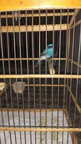 Burung Di Ciwidey Olx Murah Dengan Harga Terbaik Olx Co Id