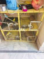 Iron cage with birds read add