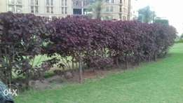 One kanal plot selling in bahria phase 1