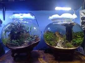 Paket Aquascape Jual Hewan Peliharaan Ikan Terlengkap Di Depok Kota Olx Co Id