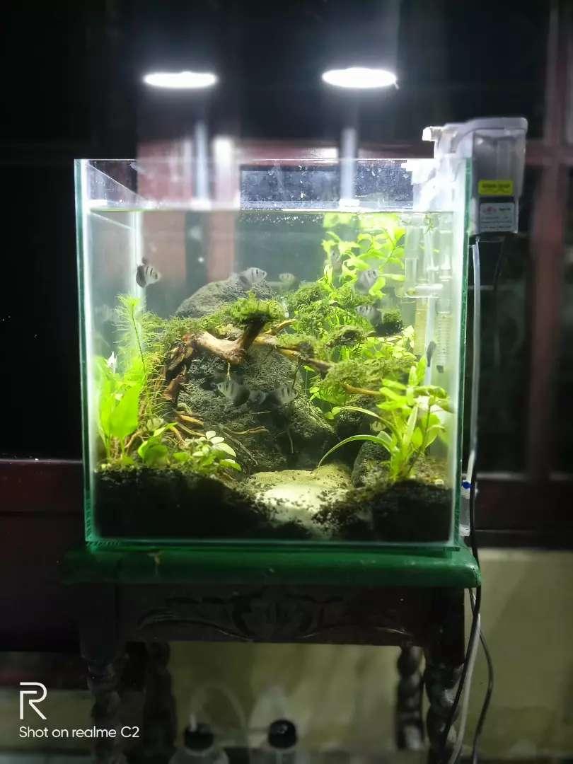 Aquascape Bonsai Natural Fullset Hewan Peliharaan 810749647