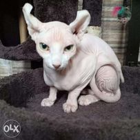 Hairless View All Ads Available In The Philippines Olx Ph