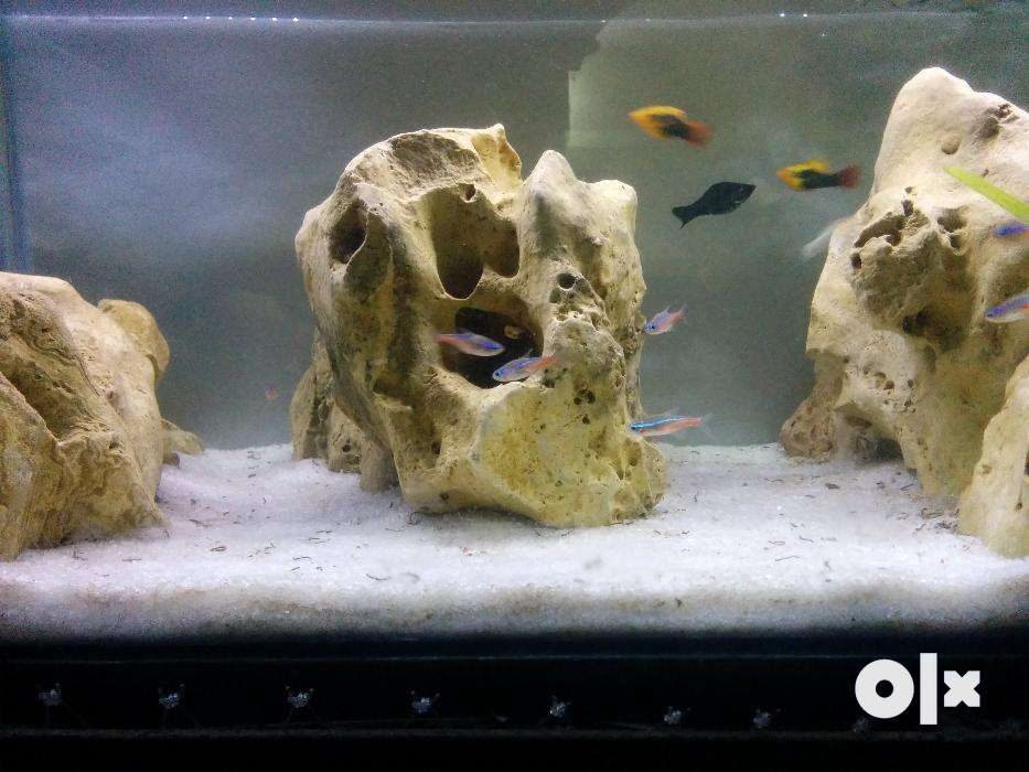 Show Only Image. Nice Aquascaping Rocks, Suitable ...