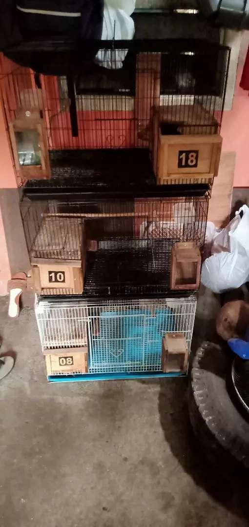 Dijual Kandang Ternak Lovebird Hewan Peliharaan 810058334