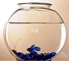 Fish with Bowl