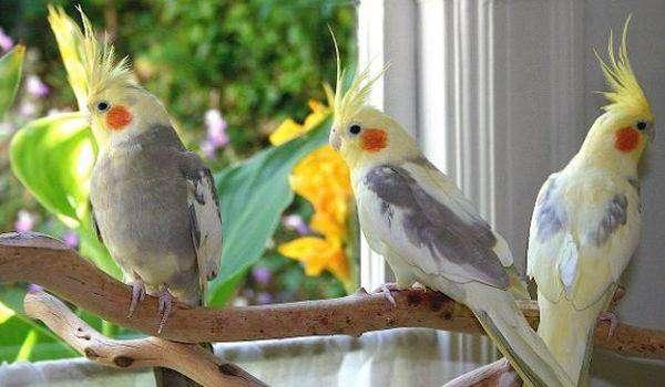 Burung Parkit Jual Hewan Peliharaan Terlengkap Di Indonesia Olx Co Id