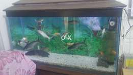 Large aqurium with fishs for salee