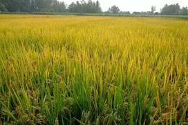 Agriculture Land for sale at yadgir Karnataka