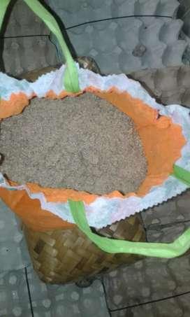 jual Telur Jangkrik Madu Untuk Ternak Jangkrik berat 500 Gram sidoarjo