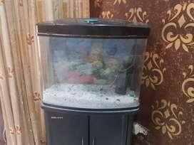 Fish aquarim