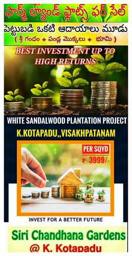 Very Lowest investment High Returns in white Sandalwood plantation
