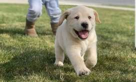 All dog breeds puppies available