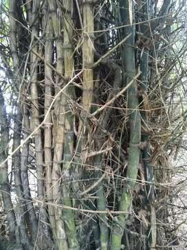 Jual segala macam bambu