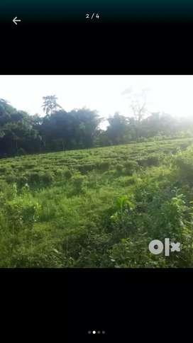 Myadi land tea Garden 3 bigha