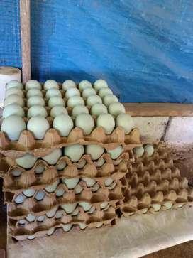 Telur Bebek Murah