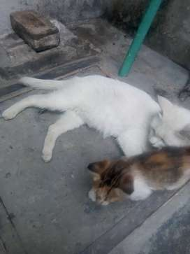 We are selling cat with three kids