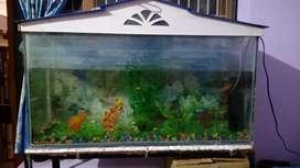 Fish tank harini