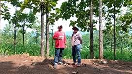 Jual tanah 100m bonus pohon jati emas include surat