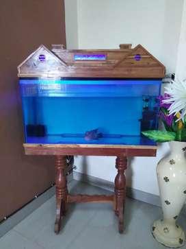 "Urgent! 3 Feet Aquarium with 6"" Flowerhorn"